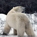 Discover Churchill Manitoba