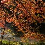 Exploring Farrar Pond and Hiking Mount Misery in Lincoln, Massachusetts